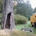 PRUNING<br>SHEARING<br>TREE REMOVAL