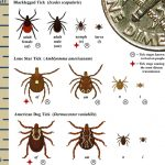 TICK<br>BITING INSECT<br>CONTROL